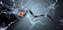 Nerve Cells concept for tumors